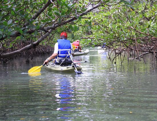 motorized kayak adventures - Picture of Motorized Kayak