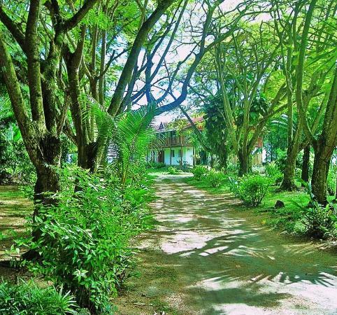 Villa Flamboyant : driveway bordered with flamboyant trees