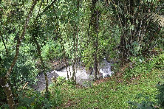 Hanging Gardens of Bali: Ayung river