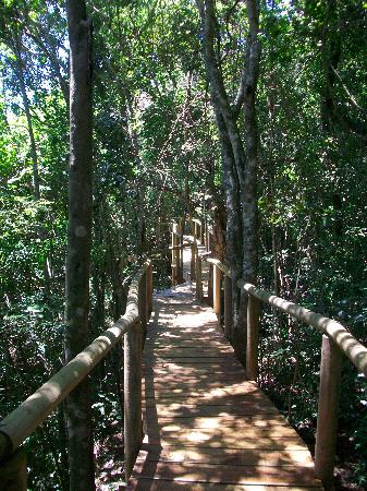 Trogon House and Forest Spa: Pathway connecting accommodation