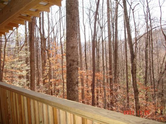 Cabins of Asheville: View from porch