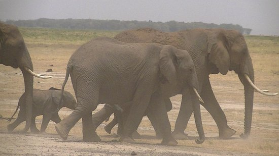 F. King Tours and Safaris - Day Tours: More elephants!