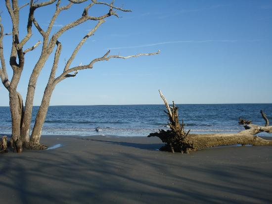 Hunting Island State Park: The eerie sculptural trees