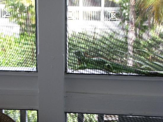 Hyatt Residence Club Key West, Beach House: We had a visitor