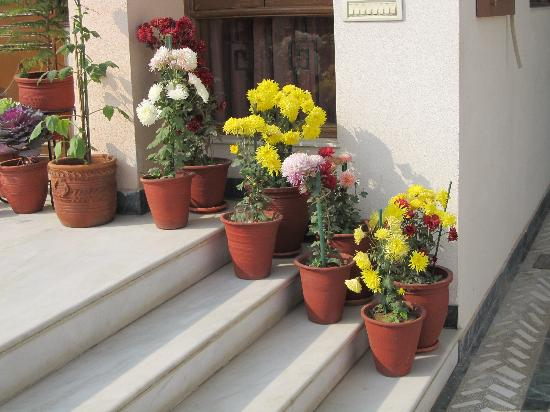 Jaipur Friendly Villa: Shveta's Flowers