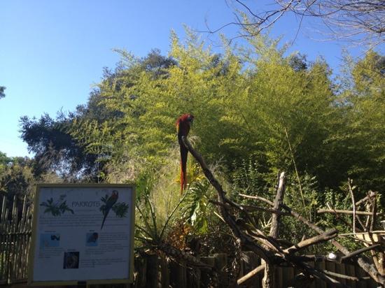 San Jose, Californien: parrot