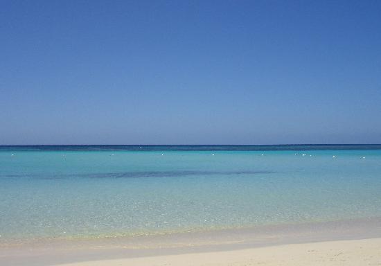 Las Sirenas Hotel & Condos: Il mare di fronte a Las Sirenas