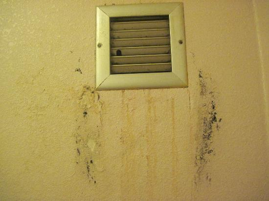 University Inn: Mold in and on wall