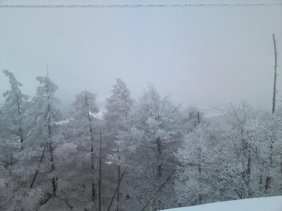 Sugadaira Kogen Ski Area : 菅平でも大量の樹氷がありました