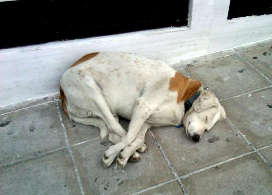 هوتل جراند بريتاني لكجري كوليكشن هوتل أثينا: Glykis the dog in front of the hotel