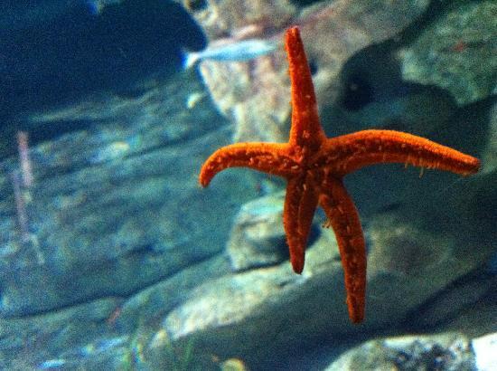 Aquarium de Paris - CineAqua: starfish