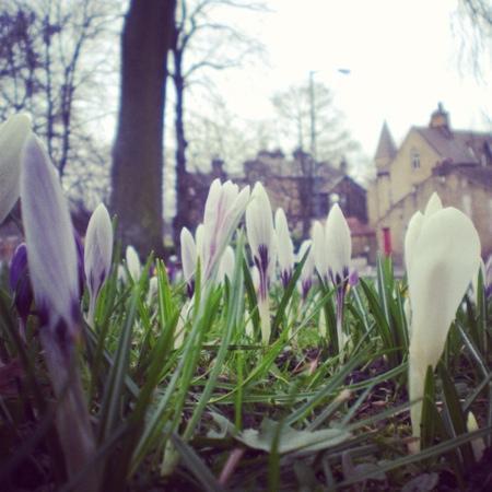 Cartwright Hall: Spring Flowers
