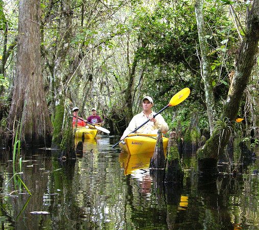 Everglades Rentals & Eco Adventures: Paddling the Everglades is fantastic!