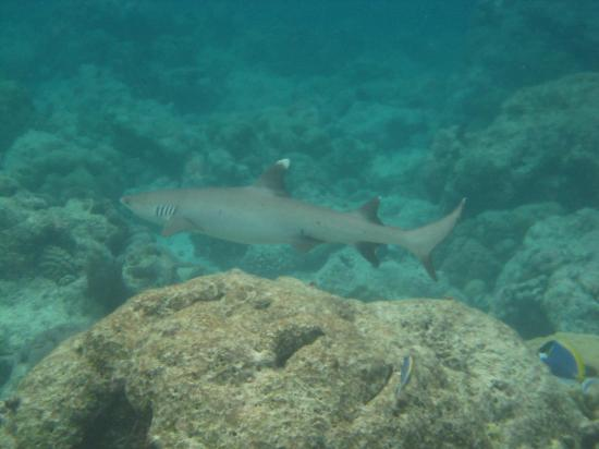 "Sun Aqua Vilu Reef: Unser ""Nachbar"""