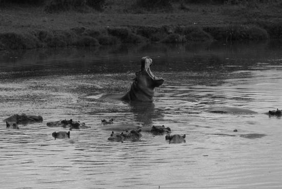Keekorok Lodge-Sun Africa Hotels: Keekorok Hippos viewing deck