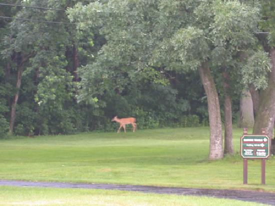 Pure Nature at Indian Trail Motel