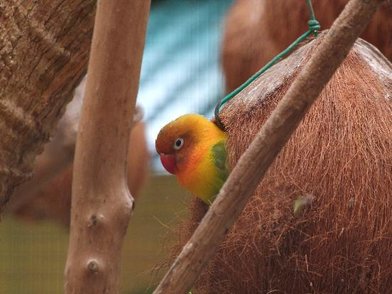Melaka Butterfly and Reptile Sanctuary : A Love Bird