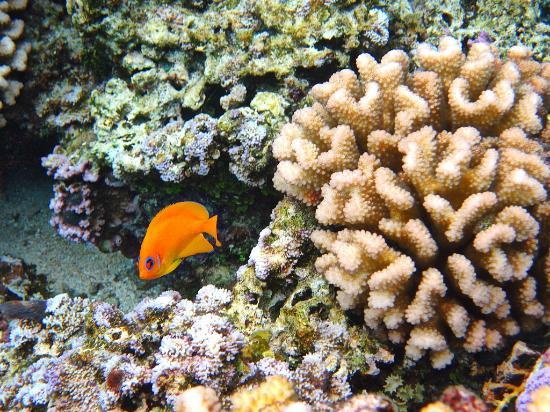 Lagoonarium: Gioco di colori fra pesci e coralli (2)