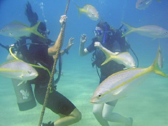 Scuba Elite: divers in Sosua