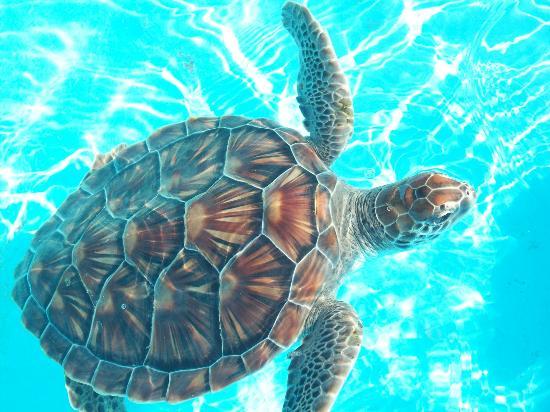 Sea Turtle Hatchery: Piletas