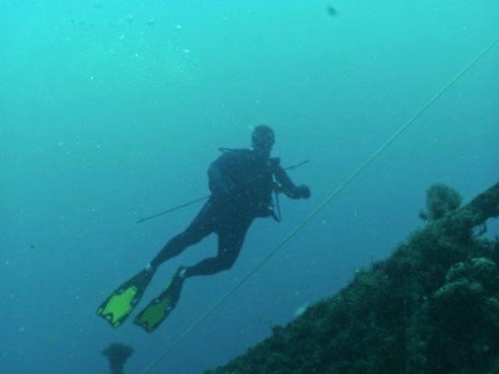 Adventure Scuba Diving : Ted on the Tortuga
