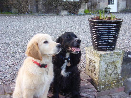 Galvelbeg House: Bailey & Murphy