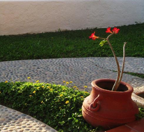 Gloria Maria Bungalows: grounds