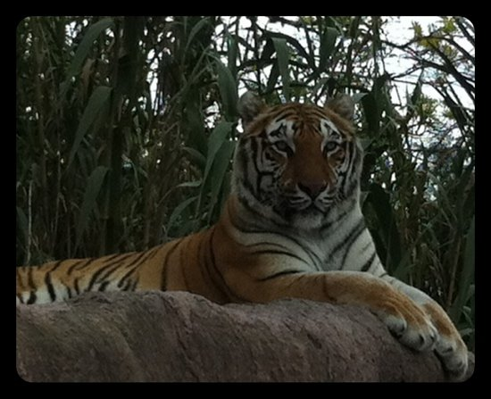 Africam Safari (Puebla, Mexico): Top Tips Before You Go ...