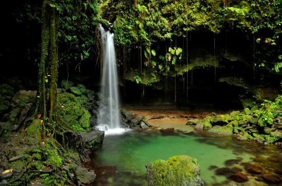กาลิบิไช, โดมินิกา: Emerald Pool - go early to beat the daytripper tours, it's worth it!