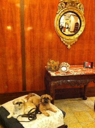 Hotel Providence: Lobby Doggie Lounge!