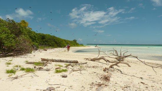 Papeete, Polynésie française : ile aux oiseaux