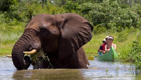 Journey Into Africa Tours and Safaris - Day Tours: Elephant taking a bath in the Zambezi River