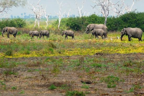 Elephants at Selous Game Reserve