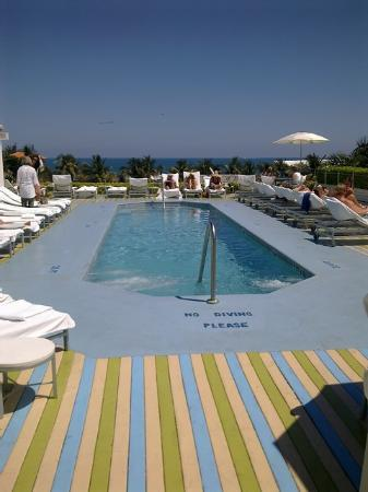 The Hotel of South Beach : Roof top pool