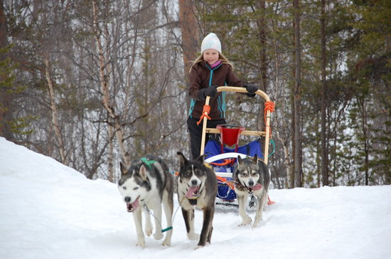 Svanvik, Noruega: Exclusive dog sled tours