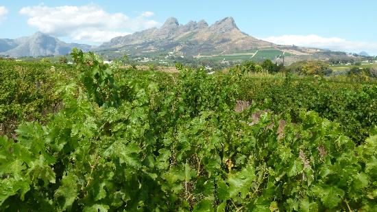 View from the vines just next to Acara