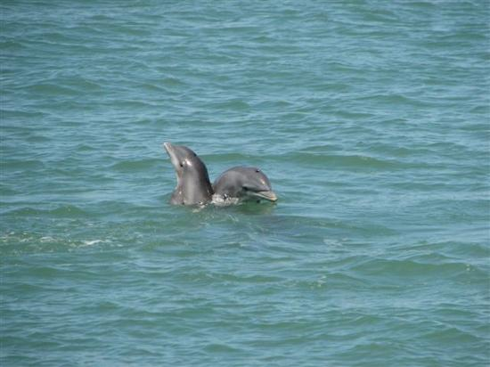 Tierra Verde, FL: Two Dolphins/FtDesoto Park