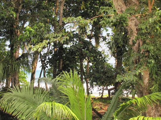 Casa Las Brisas: Garden