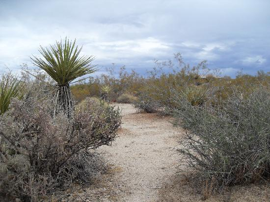 Hidden Valley Campground: Joshua Tree National Park