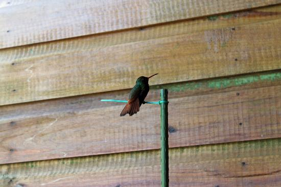 Hotel Lula's Bed and Breakfast: A friendly hummingbird at Lula's