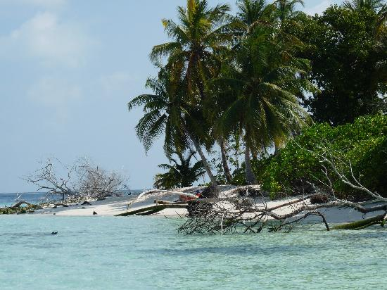Asdu Sun Island: View from the mangrove side of island