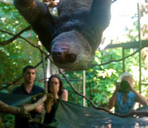 Osa Wildlife Sanctuary: Up close and personal