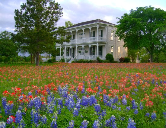 Belle of Round Top: Spring flowers March through April