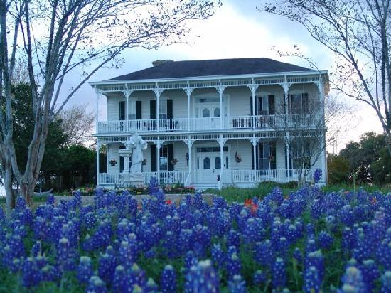 Belle of Round Top: Best Texas Bluebonnets