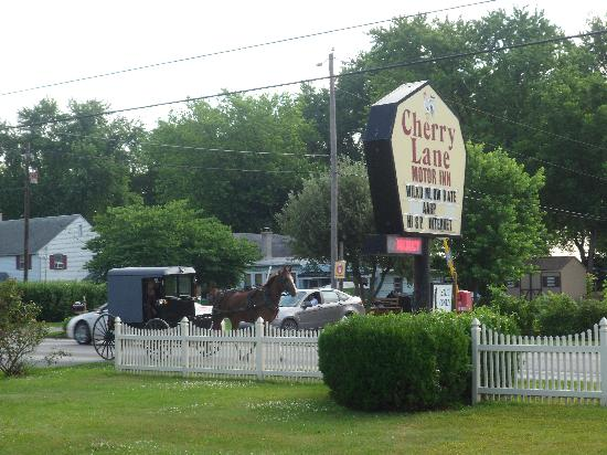 Cherry Lane Motor Inn : Amish Buggy Passing By