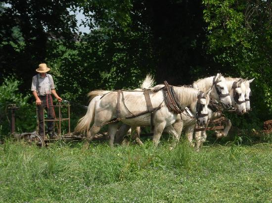 Cherry Lane Motor Inn : Amish Farm Next to Property