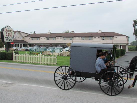 Cherry Lane Motor Inn : Amish People