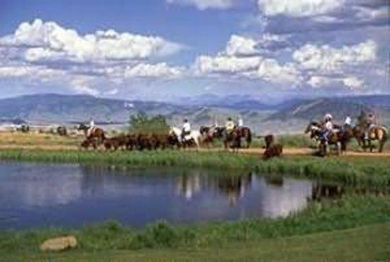 Latigo Dude Ranch : Moving Cattle at the Dude Ranch