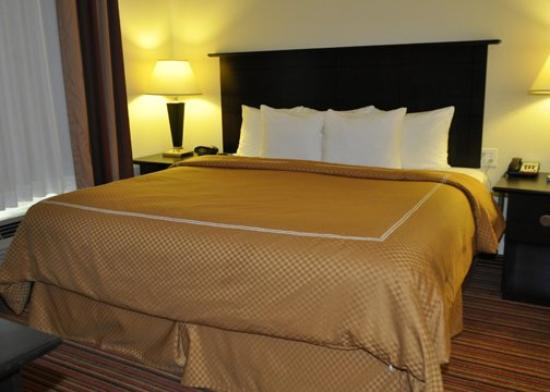 Comfort Suites Alexandria: Guest Room (OpenTravel Alliance - Guest room)
