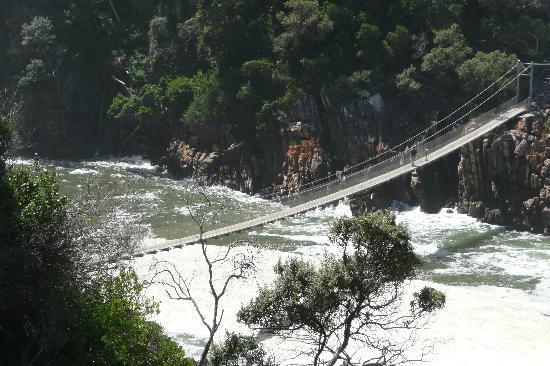 Garden Route (Tsitsikamma, Knysna, Wilderness) National Park: suspension bridge
